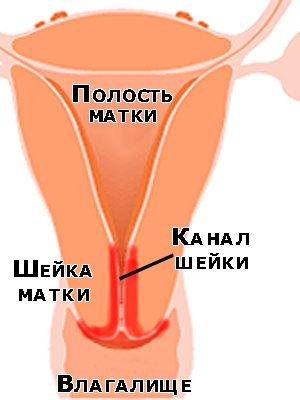 При осмотре врач-гинеколог