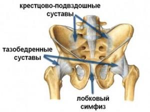 Причины развития симфизита