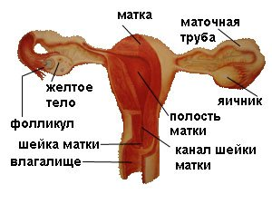 Симптомы и диагностика воспаления придатков